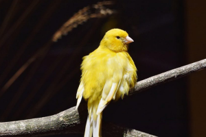 Blog Post - The Canary in The Coal Mine